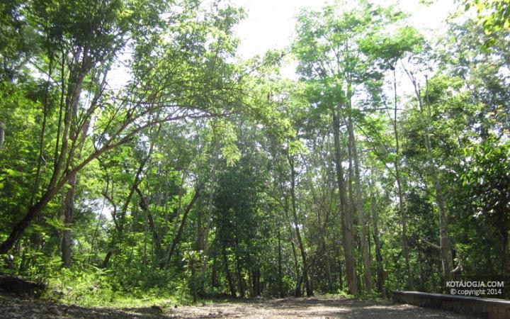 Hutan Wanagama Gunungkidul Kotajogja Suasana Kab