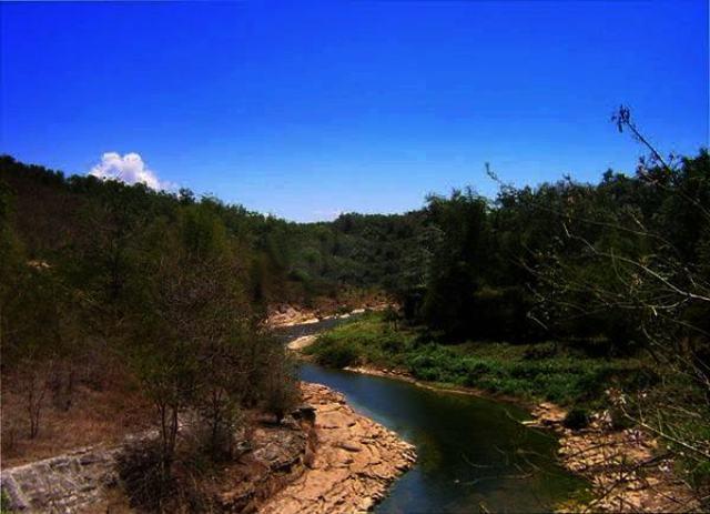 Hutan Wanagama Jati Londo Milik Pangeran Charles Jelajah Wisata Wagama