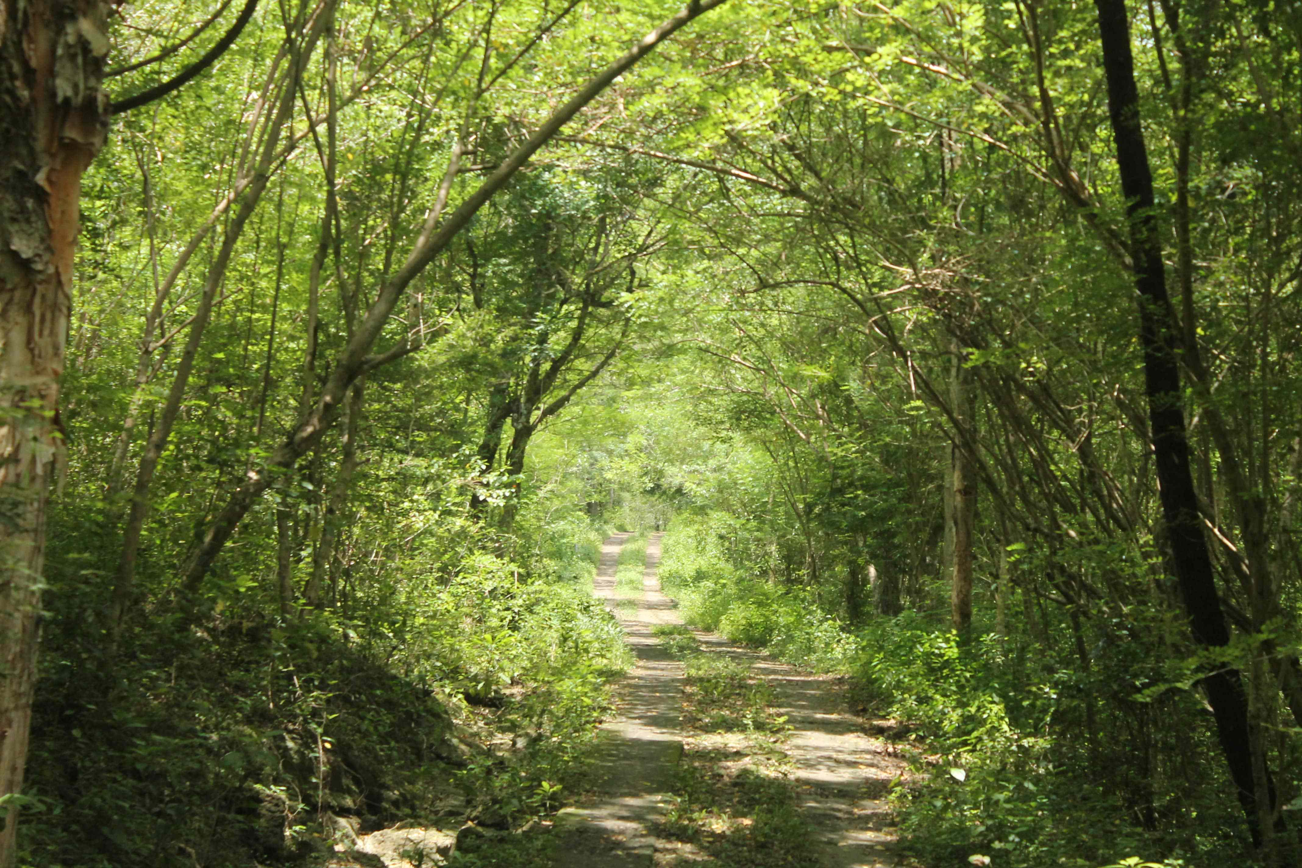Hutan Wanagama Jelajah Alam Aman Pemula Balijogja Kab Gunungkidul