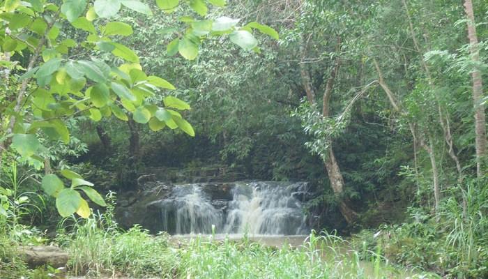 Hutan Wanagama Permata Hijau Tanah Tandus Gunungkidul Kab