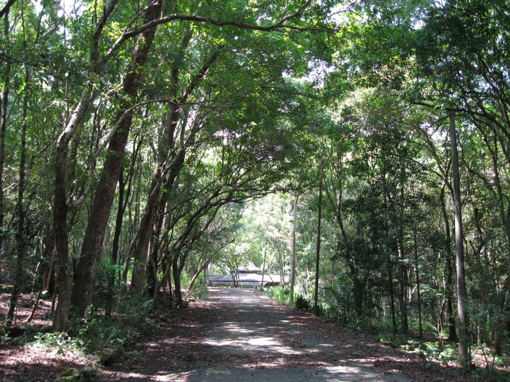 Hutan Wanagama Sejuk Gunung Kidul Yogyakarta Kab Gunungkidul
