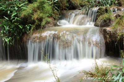 Hutan Wanagama Yogyakarta Jogja Jogjaland Net Disimpulkan Adanya Memberikan Manfaat