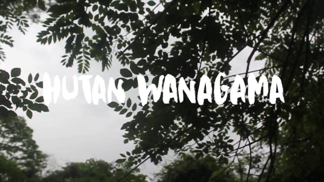 Indahnya Pesona Hutan Wanagama Destinasi Wisata Yogyakarta Youtube Kab Gunungkidul
