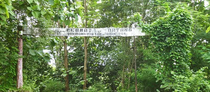 Inilah Spot Camping Jogja Bisa Memanjakan Mata Hutan Wanagama Kab
