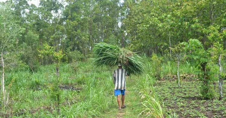 Lokasi Tempat Wisata Jogja Sekitarnya Hutan Wanagama Masyarakat Rumput Kalanjana