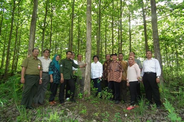 Menteri Lhk Kunjungi Wanagama Petak Hutan Pangan Siangnya Setelah Selesai