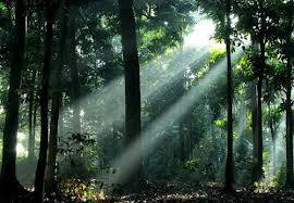 Miniatur Beragam Tanaman Hutan Wanagama Kab Gunungkidul