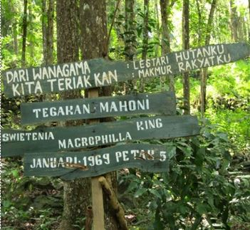 Renungan Hutan Wanagama Jantera Geografi Upi Pesan Kab Gunungkidul