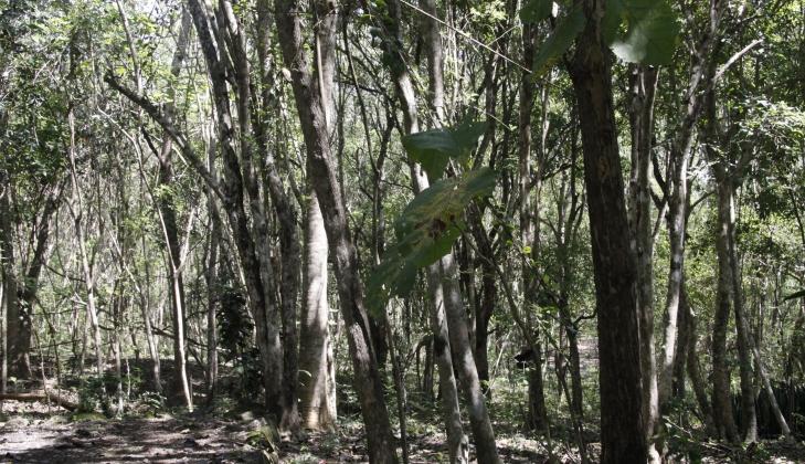 Universitas Gadjah Mada Berkelas Dunia Hutan Wanagama Praktik Konservasi Bagi