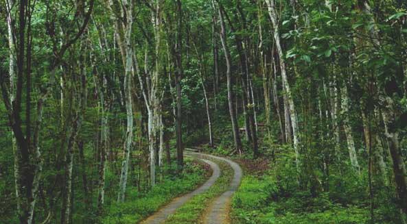 Wisata Gunungkidul Cocok Outbound Asik Seru Hutan Wanagama Kab