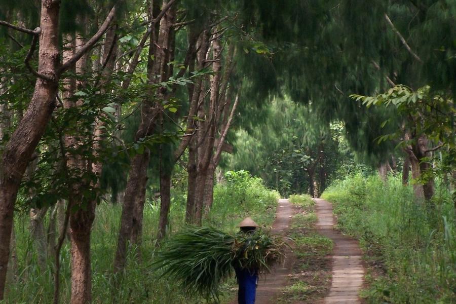Wisata Hutan Wanagama Bakpia Mutiara Jogja Kab Gunungkidul