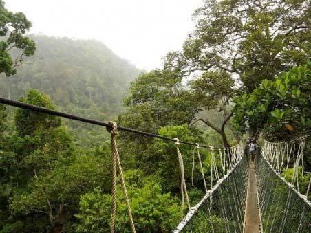 Wisata Hutan Wanagama Jogja Tempat Terbaik Indonesia Berpetualang Kab Gunungkidul