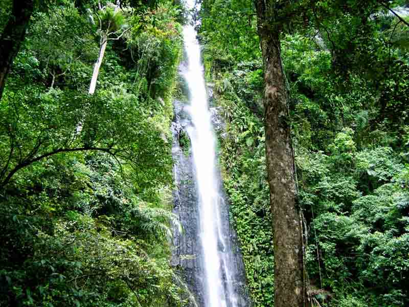 Wisata Jogja Hutan Wanagama Sebuah Kawasan Lindung Seluas 600 Hektar