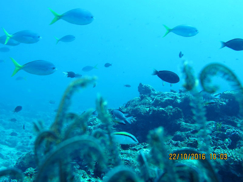 Diving Jayapura 10 Landbase Tablanusu Terumbu Karang Pun Hidup Sampai