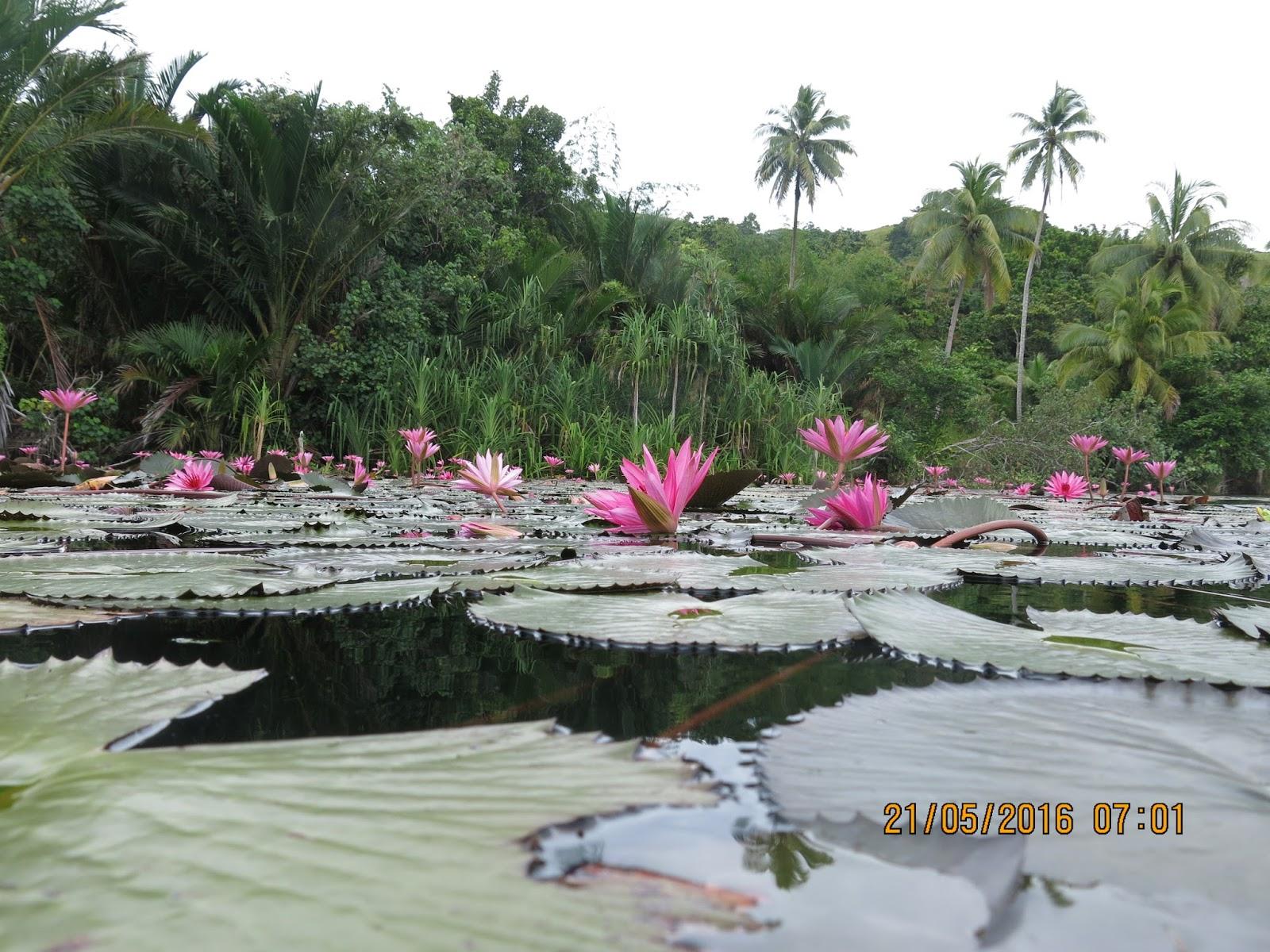 Memancing Jayapura 01 Danau Sentani Luas Gampang Susah Umpan Nasi