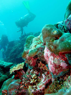 Secuil Keindahan Laut Papua Nur Alam Mn Satulagi Kolam Renang