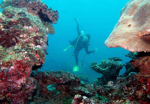 Secuil Keindahan Laut Papua Nur Alam Mn Tidak Kolam Renang