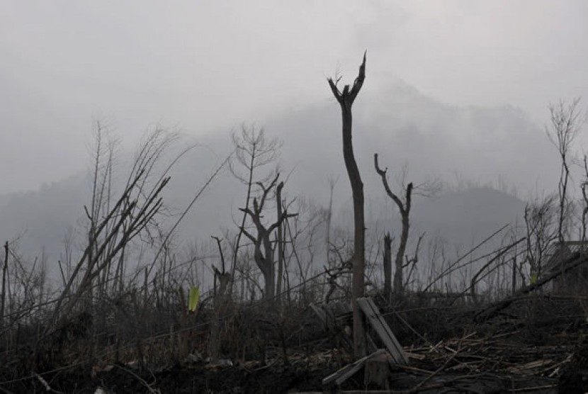 Hutan Rusak Jayapura Capai Tujuh Hektare Republika Online Ilustrasi Pesawat