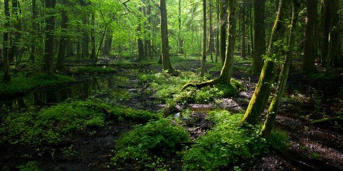 Klhk Bupati Inhu Digugat Terkait Izin Pembebasan Hutan Merdeka Ilustrasi
