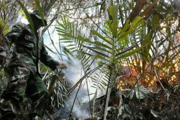 Rohaniawan Eksploitasi Hutan Perkebunan Sawit Mengancam Papua Pesawat Tengah Kab