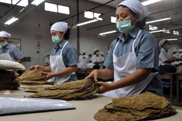 Jember Kembangkan Objek Wisata Tembakau Antara News Jawa Timur Museum