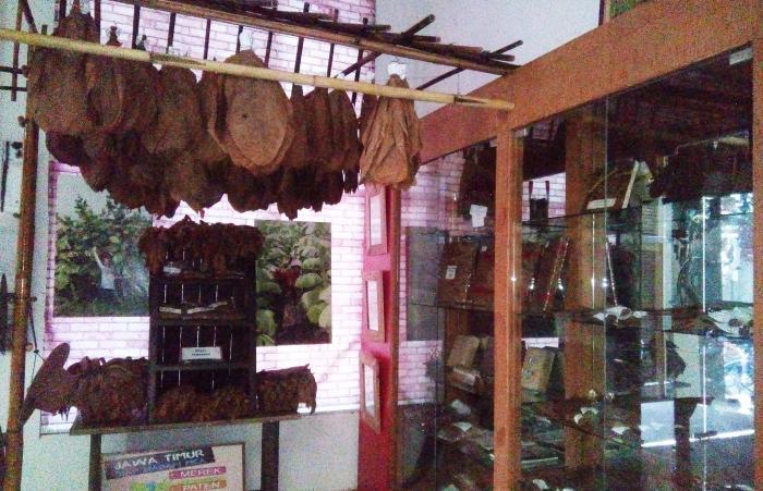 Museum Tembakau Jember Membuka Hati Tidak Membenci Daun Bermacam Macam