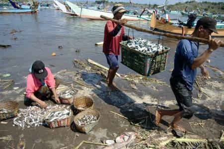 Jember Information Centre Tourism Tpi Puger Tempat Pelelangan Ikan Terbesar