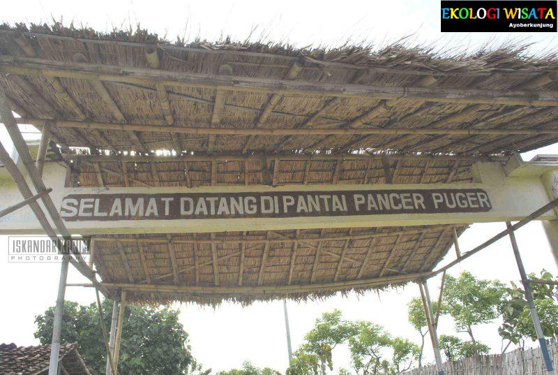 Target Wisata Alam Pancer Pantai Selatan Kecamatan Puger Desa Berada