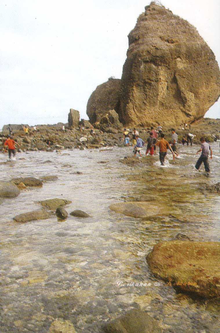 Pantai Tanjung Papuma Kabupaten Jember Wisata Jawatimuran Watu Ulo Kab