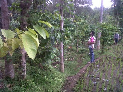 Jual Tanah Rembangan Murah Disewakan Strategis Bisnis Pariwisata Kawasan Wisata