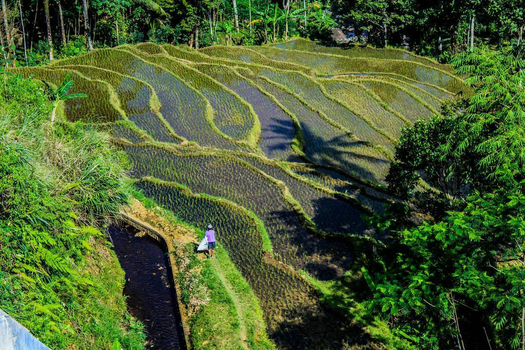 Mulai Jenuh Refreshing Jember Ala Ubud Bali Yuk Traveling Ubudnya