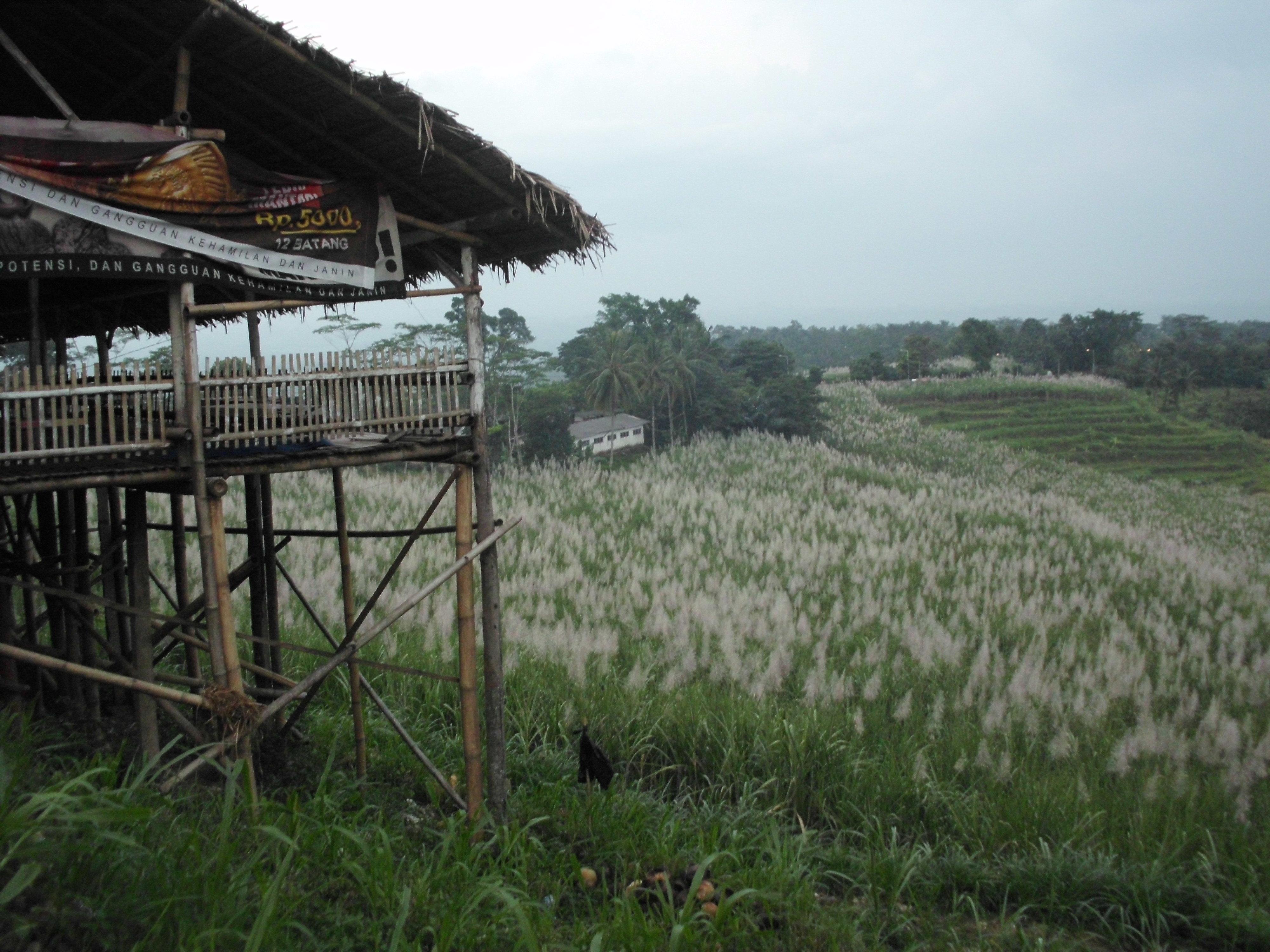 Seribu Bukit Diatas Puncak Rembangan Sos Jemberjawatimuran Sebentar Kab Jember