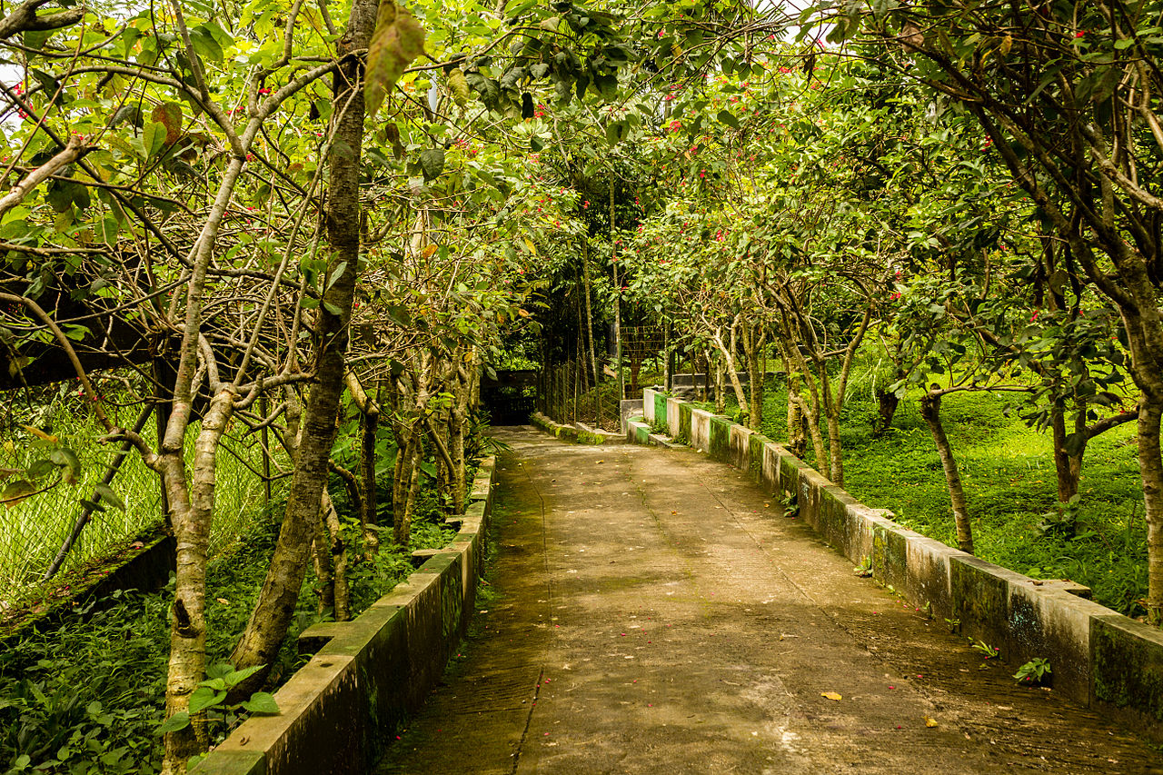 10 Tempat Wisata Jember Wajib Dikunjungi Taman Botani Air Tiara