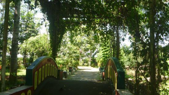Jalan Menuju Gazebo View Sawah Picture Sukorambi Botanical Garden Taman