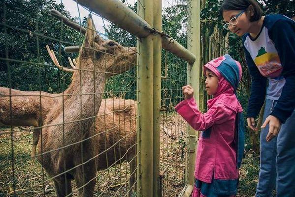 Taman Botani Sukorambi Indah Jember Jawa Timur Lihat Id Indonesia