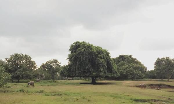 Keindahan Alam Taman Nasional Meru Betiri Lokal Karya Lokalkarya Salah