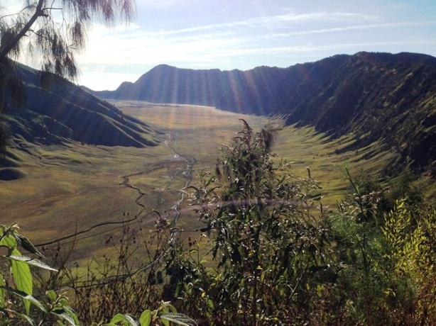 Kementerian Pariwisata Ragam Flora Fauna Unik Taman Nasional Meru Betiri