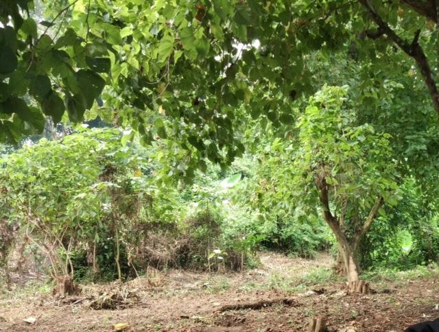 Meru Betiri Bangun Destinasi Sba Institute Sbaonline Jember Taman Nasional
