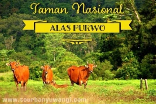 Meru Betiri National Park Paket Wisata Banyuwangi Tour Alas Purwo