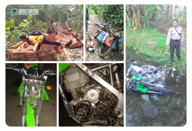 Motor Jagawana Dirusak Pelaku Illegal Logging Kawasan Taman Jember 25