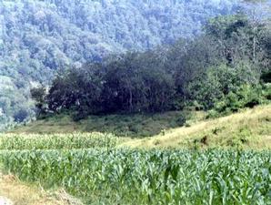 Pembalakan Liar Marak Taman Nasional Meru Betiri Rio Ardi Blog
