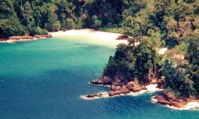 Surga Keberagaman Satwa Alam Liar Taman Nasional Meru Betiri Hutan