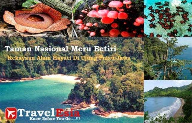 Taman Nasional Meru Betiri Jawa Timur Seru Liburan Inet Kab