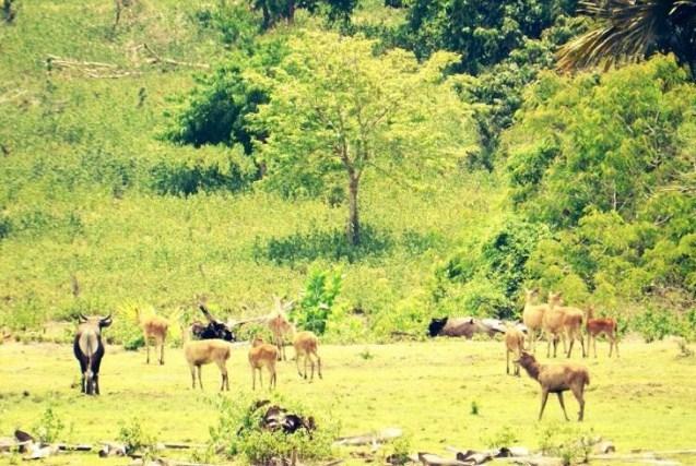 Taman Nasional Meru Betiri Jember Jawa Timur Flora Fauna Kab