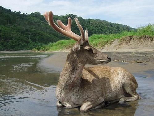 Taman Nasional Meru Betiri Jember Jawa Timur Flora Fauna Surganya