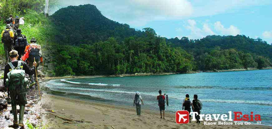 Taman Nasional Meru Betiri Kekayaan Alam Hayati Ujung Pulau Berada