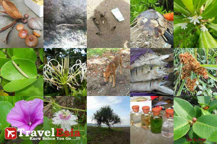 Taman Nasional Meru Betiri Kekayaan Alam Hayati Ujung Pulau Tumbuhan