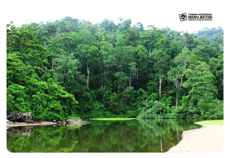 Taman Nasional Meru Betiri Muara Barat Bandealit Kabupaten Jember Kab