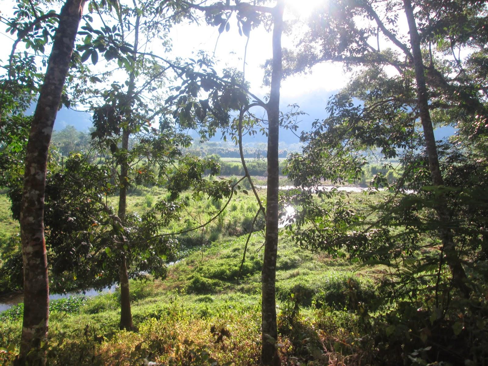 Taman Nasional Meru Betiri Tempat Komplit Petualang Amazon Banyuwangi Kab