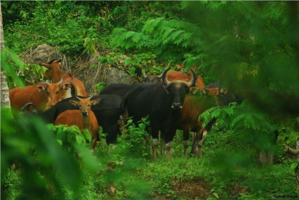 Taman Nasional Meru Betiri Tempat Wisata Menakjubkan Jawa Timur Kab